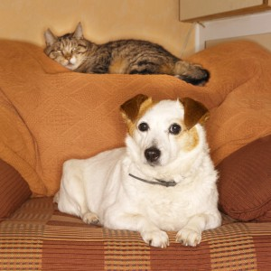 Cat and dog couch